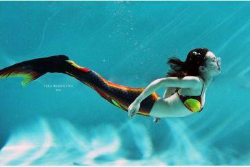 Хвост Дельфина королева черный фото Парди
