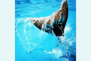 Хвост Дельфина Морская волна под водой_3